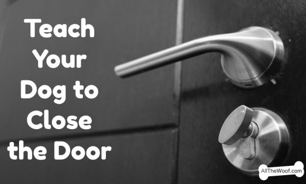 Teach Your Dog to Close the Door