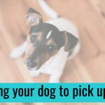Teaching Your Dog to Pick Up Items, Part 1
