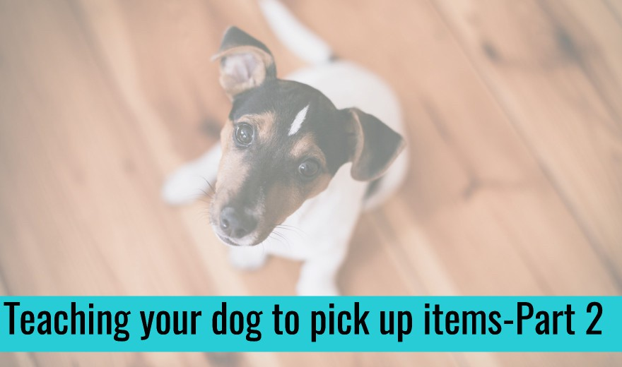 Teaching Your Dog to Pick Up Items, Part 2